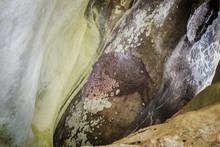"""Sulawesi ; Die Höhle  """" Leang Pettakere """" Mit Fels Und Höhlenzeichnungen. Hirscheber Und Hände, Eine Der ältesten Figurativen Darstellungen Weltweit."""