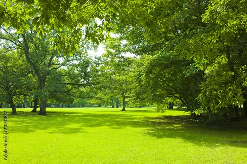 Garden Poster Forest Park green