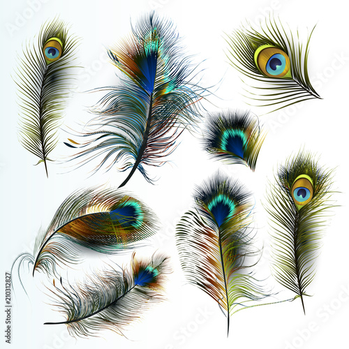 Obraz paw   beautiful-collection-of-vector-realistic-peacock-feathers