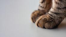 Cat Paws In Closeup
