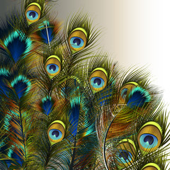 Naklejka Boho Fashion vector peacock feathers illustration in blue and green colors