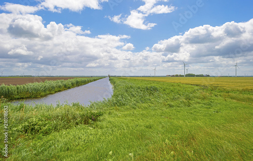 Fotobehang Kanaal Waving reed in the wind along the shore of a canal in summer