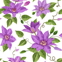 Watercolor Clematis Flowers. F...