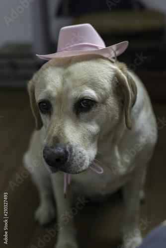 Foto  Gelber Hund Welpe