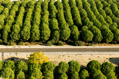 Foto op Canvas Pistache Pine forest aerial landscape with a railroad
