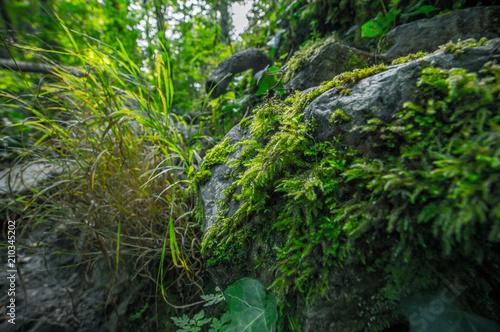 Fotografia, Obraz  mousse sur pierre