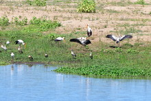 Storks,goose And Spoonbills On...