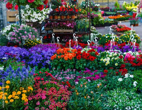 flower seedlings for sale on the market