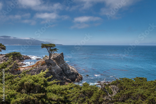 Ocean view of rocks and a single cypress tree. The sky and ocean is blue. There are white clouds in the sky. Green scrubs are in the foreground.