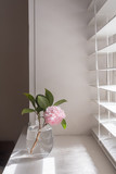 Pale pink camellia in glass of water next to window with light and shadows from blinds (selective focus)