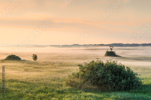 Tuinposter Beige Foggy landscape of meadow with shrubs, trees, grass at dawn