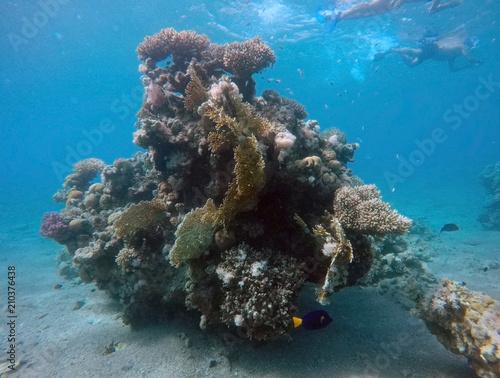 Tuinposter Koraalriffen Coral reef in the Red Sea next to Eilat