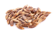 Dried Fruits Seeds From Date P...