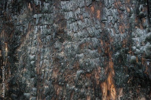 Texture of burnt tree