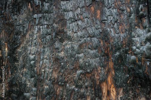 Fotobehang Brandhout textuur Texture of burnt tree