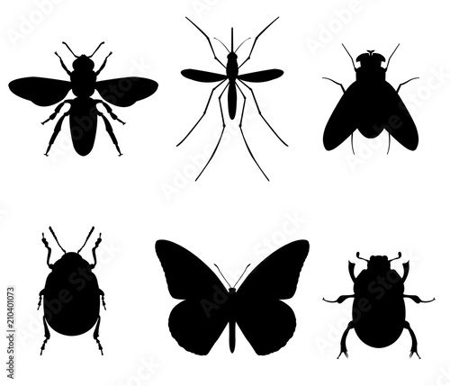 Fotografia Set of icons insects