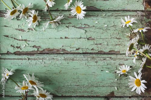 Cadres-photo bureau Fleuriste Arrière-Plan Marguerite sur Fond bleu