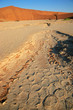 Leinwandbild Motiv Desert landscape with cracked mud, dead tree and red sand dunes, Sossusvlei, Namibia.