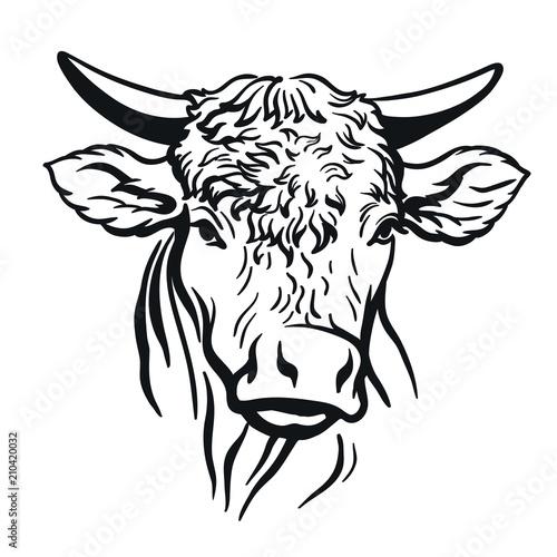 bull head. vector illustration on white