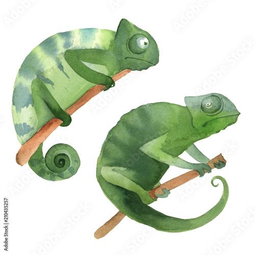 dwa-zielone-kameleony