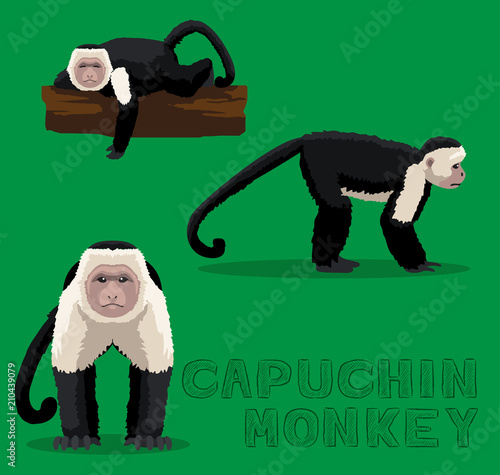 Fotografija Monkey Capuchin Cartoon Vector Illustration