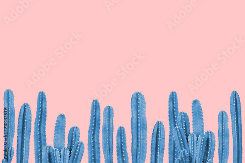 Blue cactus on pink background Canvas Print