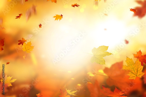 Obraz Herbsthintergrund  - fototapety do salonu