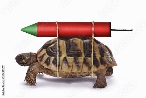 Foto op Aluminium Schildpad Velocidad a la tortuga con el cohete