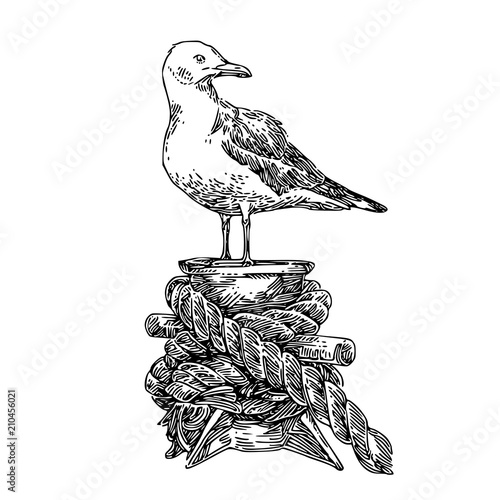 Obraz na płótnie Seagull on mooring. Sketch. Engraving style. Vector illustration.