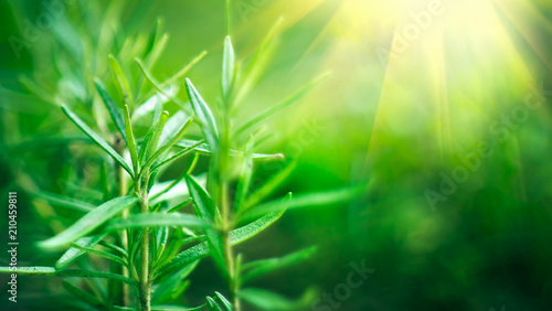 Zdjęcie XXL Bamboo forest. Growing bamboo border design over blurred sunny background. Nature backdrop
