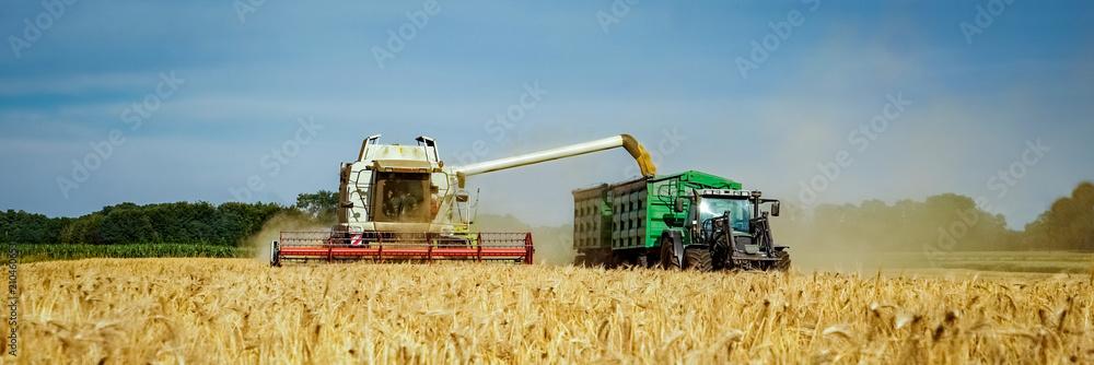 Fototapeta Getreideernte - Mähdrescher und Landtechnik für den Getreideabtransport, Banner