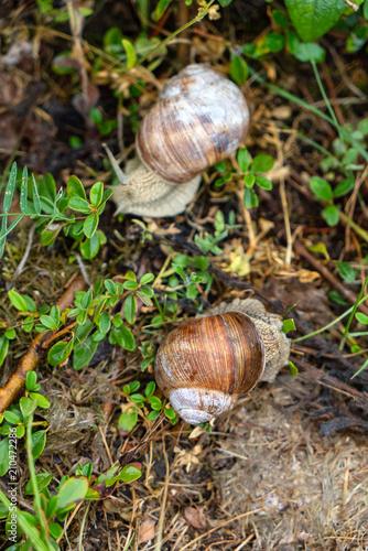 snail in the garden