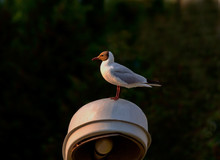 Bird On Lantern Lighting