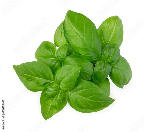 Canvastavla Fresh green leaves of basil isolated on white background top view