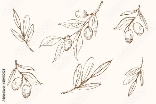 Tło - oliwki