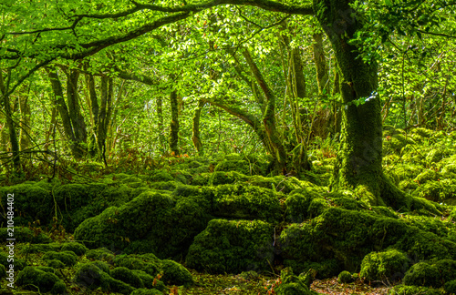Türaufkleber Landschaft Mossy grounds and wonderful wild nature at Killarney National Park