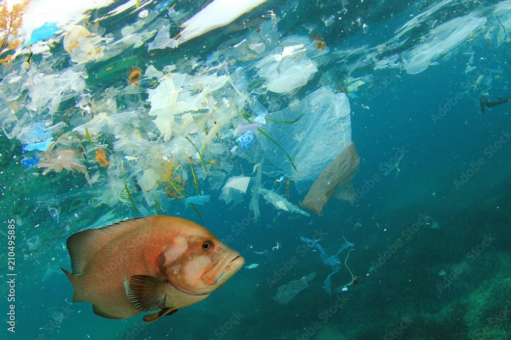 Fototapeta Fish and plastic pollution in sea. Microplastics contaminate seafood.