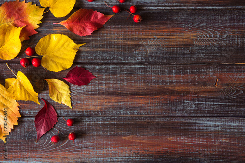 Obraz Autumn colored leaves top view copy space - fototapety do salonu