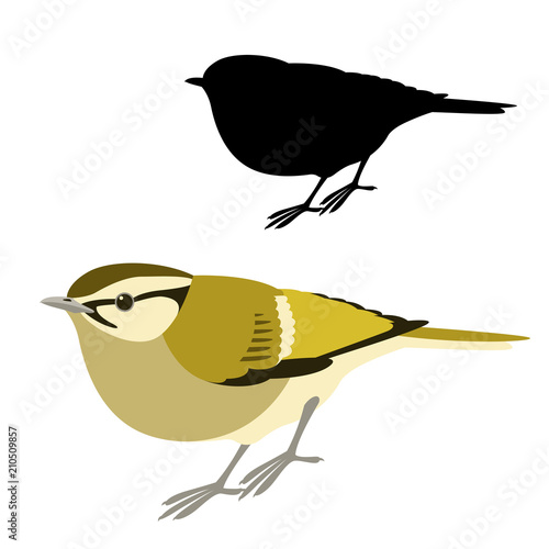 Valokuvatapetti lemon - rumped warbler  bird vector illustration flat style  silhouette