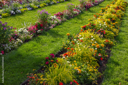 Aluminium Prints Garden city park blooming flowers at green lawn
