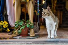 A Street Cat In Istanbul