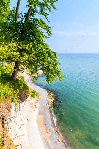 wybrzeze-z-drzewami