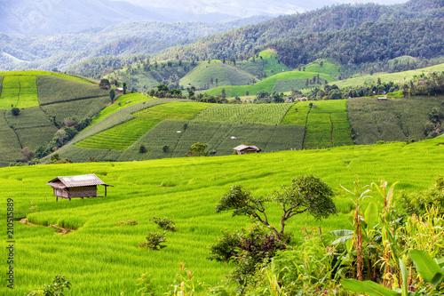 In de dag Lime groen Green Terraced Rice Field in Pa Pong Pieng , Mae Chaem, Chiang Mai Province, Thailand