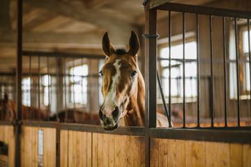 Beautiful horses, animals, pasture, stables, horseback riding