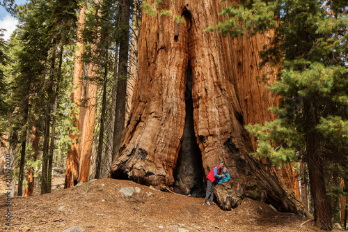 Fotografía  Mother with infant visit Sequoia national park in California, USA