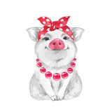 Funny pig wearing bandana. Isolated on white. Cute watercolor illustration - 210526868