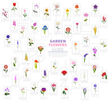 Your Garden Guide. Top 50 Most...