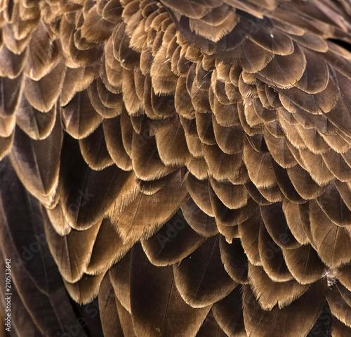Photo  Plumes d'aigle au château de Peyrepertuse, Duilhac-sous-Peyrepertuse, Aude, Fran