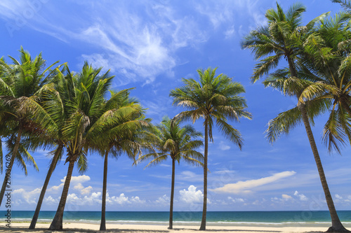 Foto auf AluDibond Palms Coconut Trees On The White Beach.