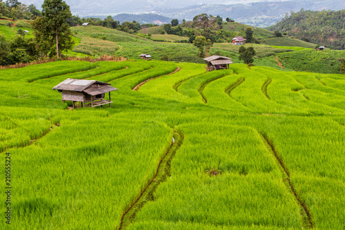 In de dag Rijstvelden Green Terraced Rice Field in Pa Pong Pieng , Mae Chaem, Chiang Mai Province, Thailand